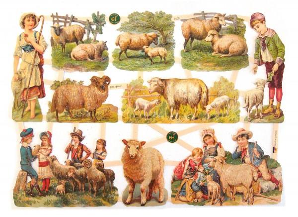 Glanzbilder, Schafe