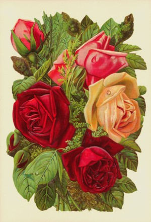 Aufstellschmuckkarte dunkle Rosen