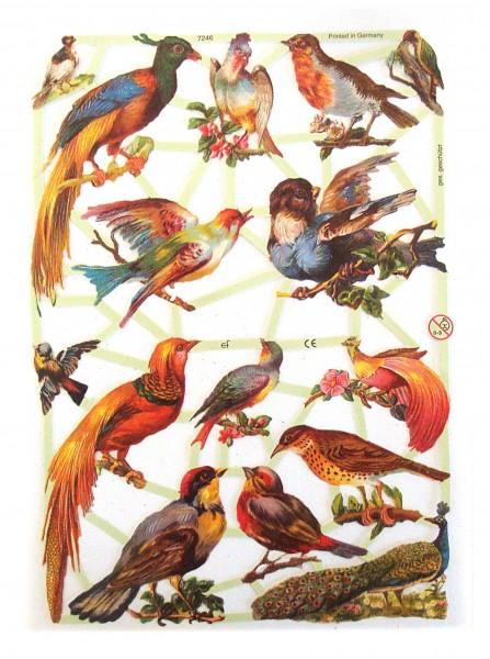 Glanzbilder, Vögel
